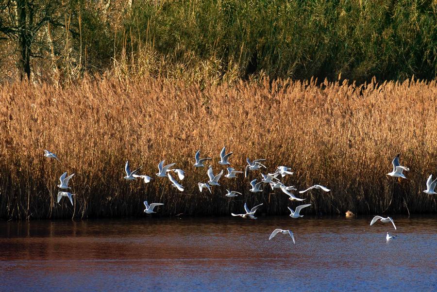 Al delta del río Tordera, mejor venir con prismáticos.