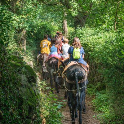 Paseo en burro por el Parque de la Pedra Tosca.